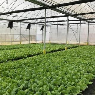 农业/养殖业温湿度监控方案